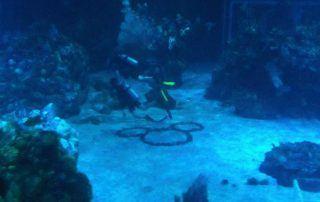 Dive Disney Dive Trip Videos
