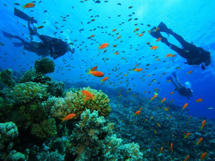 Mac's Sports Dive Trips