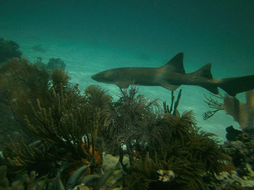 Florida Keys Dive Trips