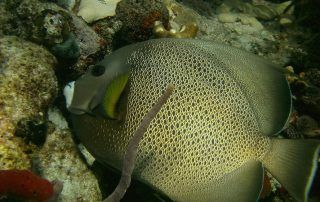 Florida Keys Dive Trip Videos