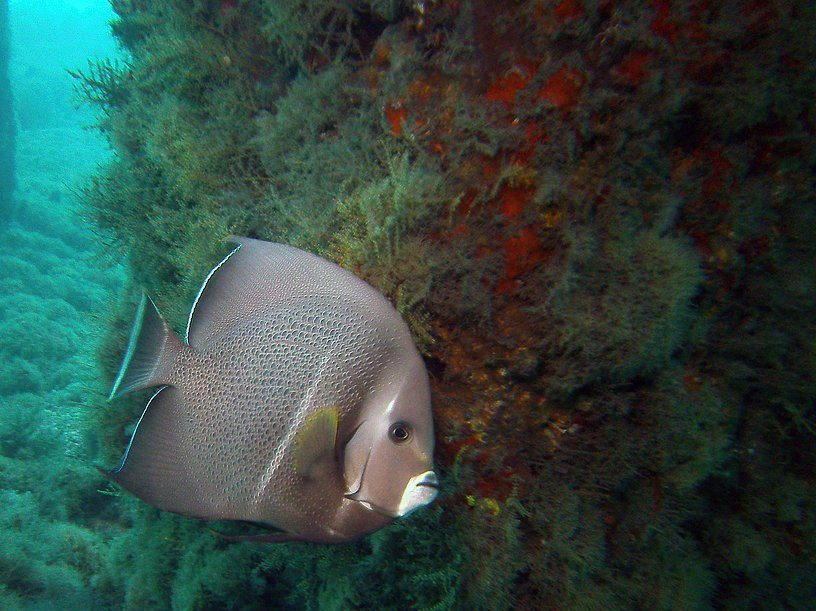 West Palm Dive Trip Videos